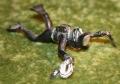 007 Lone Star Thunderball frogmen figures (6)