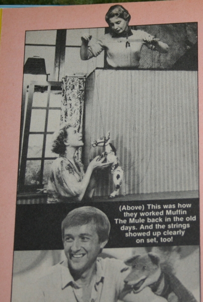 Look in annual (c) 1982 (4)