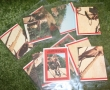 Temple of Doom Gum Cards (6)